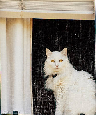 Photograph - White Kitty No.2 by Cindi Castro