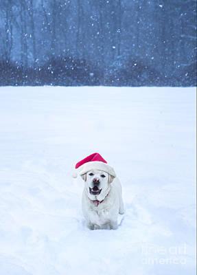 White Lab Christmas Art Print by Diane Diederich