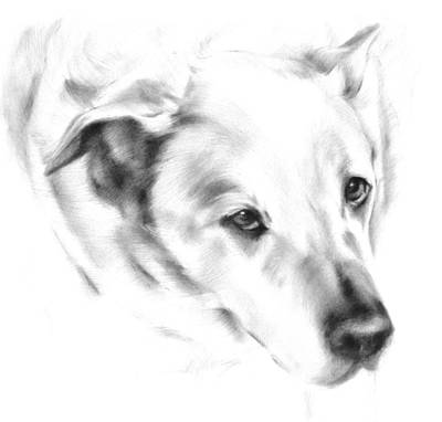 Drawing - White Labrador by Natasha Denger