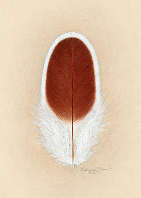 Rooster Drawing - White Laced Red Cornish Feather by Katherine Plumer