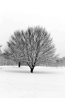 Photograph - White Landscape by CJ Rhilinger