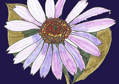 Aster Drawing - White Light Purple Aster by Miriam Kalliomaki