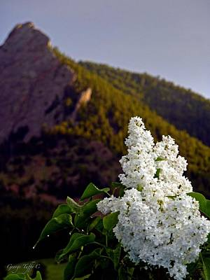 Photograph - White Lilac Flatirons by George Tuffy
