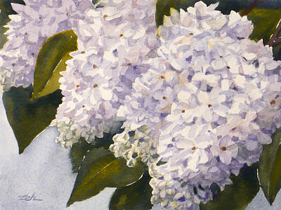 Painting - White Lilacs by Janet Zeh