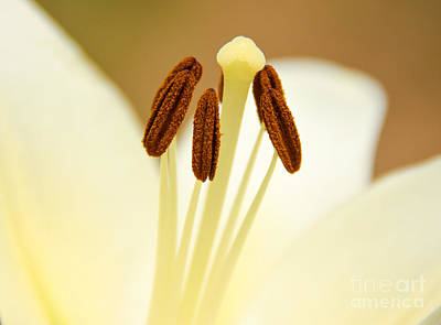 Art Print featuring the photograph White Lily #2 by Lisa L Silva