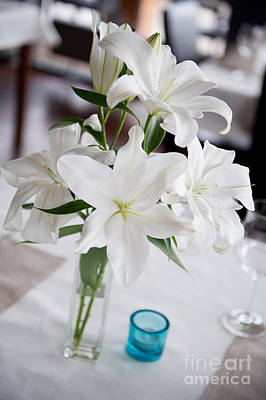 White Lilium Lily Flowers Blooming In Vase  Art Print by Arletta Cwalina