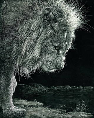 Scratchboard Painting - White Lion Kingdom by Lesley Barrett