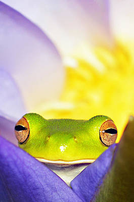 Photograph - White Lipped Tree Frog by David Clode
