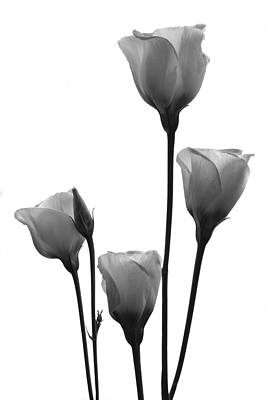 Photograph - White Lisianthus. by Terence Davis