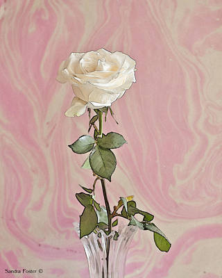 Art Print featuring the photograph White Long Stemmed Rose by Sandra Foster
