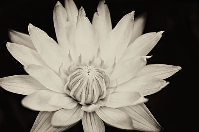 Photograph - White Lotus by U Schade
