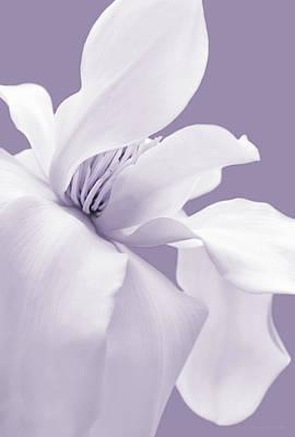 Photograph - White Magnolia Flower Lavender by Jennie Marie Schell