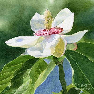 White Magnolia Square Design Art Print by Sharon Freeman