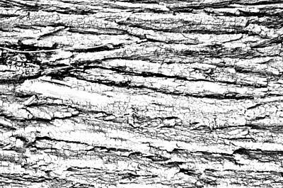 Photograph - White Marbled Tree Bark by Michelle McPhillips