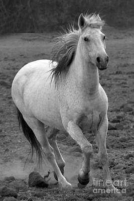 Photograph - White Mare Approaches Number One Close Up Black And White by Heather Kirk