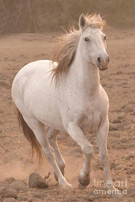 Photograph - White Mare Approaches Number One Close Up Muted by Heather Kirk