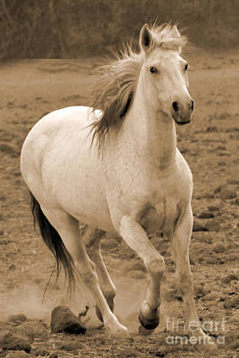 Photograph - White Mare Approaches Number One Close Up Sepia by Heather Kirk