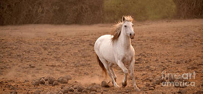 Photograph - White Mare Approaches Number One Panoramic Brighter by Heather Kirk