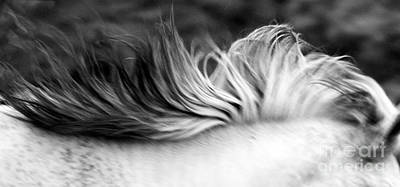 Photograph - White Mare Mane Number One Close Up Panoramic Black And White by Heather Kirk