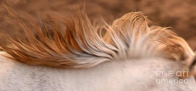 Photograph - White Mare Mane Number One Close Up Panoramic Brighter by Heather Kirk