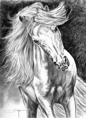 Dachshund Puppy Drawing - White Miniature Horse Stallion by Elizabeth Sage