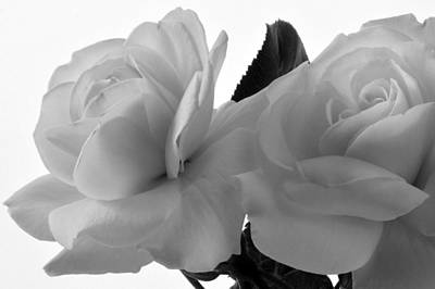 Photograph - White Monochrome Roses. by Terence Davis