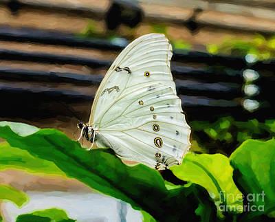 White Morpho Art Print by Jon Burch Photography