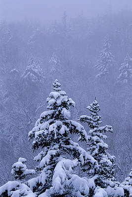 White Mountain National Forest Photograph - White Mountain National Forest, Nh Usa by Peter Essick