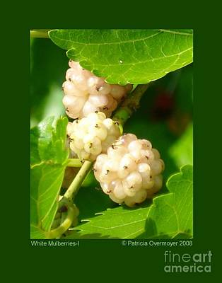 White Mulberries-i Art Print