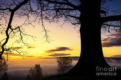 White Oak At Sunrise Art Print by Thomas R Fletcher