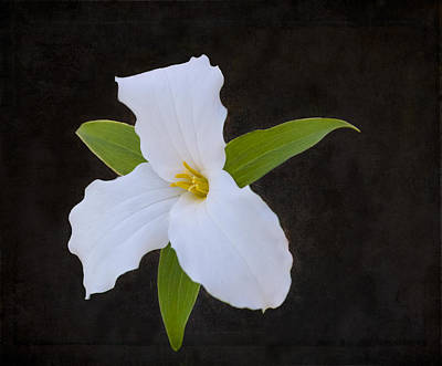 Photograph - White On Black by Garvin Hunter