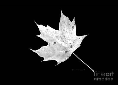 Photograph - White On Black Maple Leaf by John Stephens