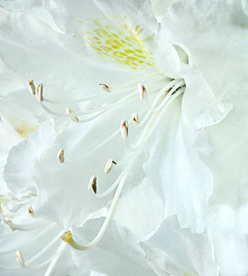 Photograph - White On White by Mary Jo Allen