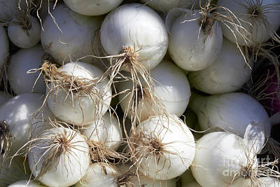 Photograph - White Onions by Tony Cordoza