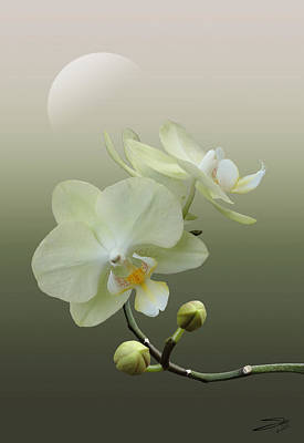 Photograph - White Orchid At Dawn by IM Spadecaller