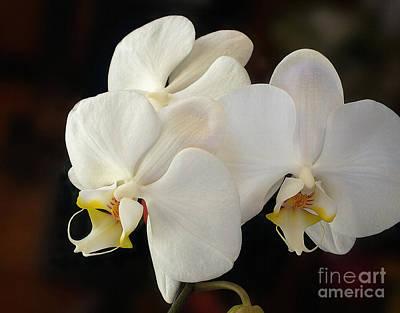 White Orchid - Doritaenopsis Orchid Art Print by Kaye Menner