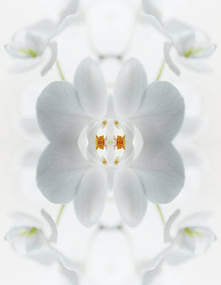 Close Up Photograph - White Orchid Flower by Silvia Otte