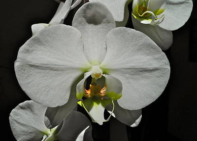 Photograph - White Orchid I I I by Kirsten Giving