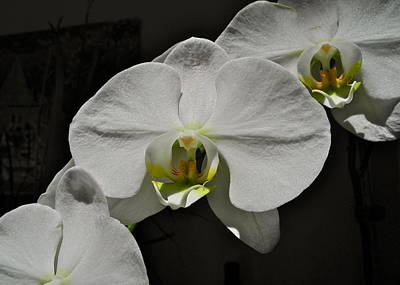 Photograph - White Orchid I by Kirsten Giving
