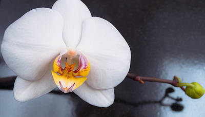 Photograph - White Orchid by Iryna Soltyska