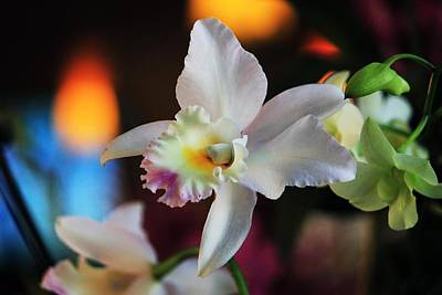 Photograph - White Orchid by Michael Saunders