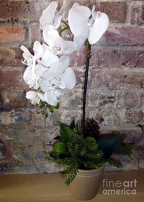 Photograph - White Orchid Old Brick by Barbie Corbett-Newmin