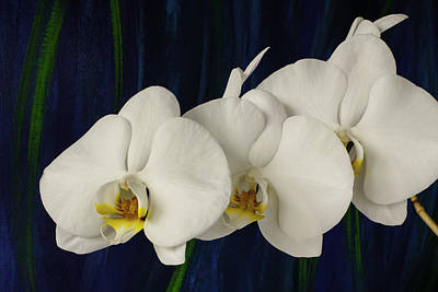 Photograph - White Orchid by Randy Grosse