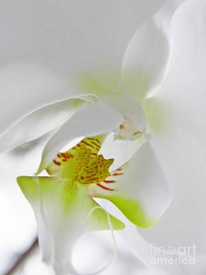 Photograph - White Orchid by Sarah Loft