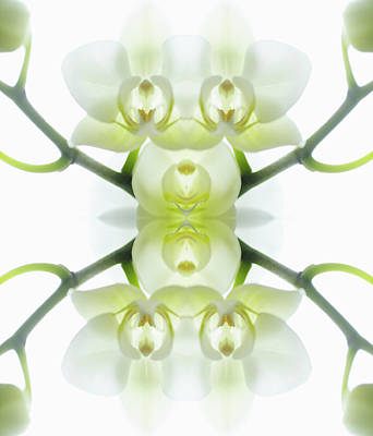 Close Up Photograph - White Orchid With Stems by Silvia Otte