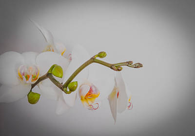 Photograph - White Orchid With Yellow Center by Iryna Soltyska