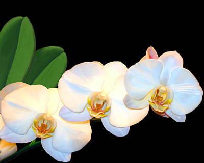Mixed Media - White Orchids by Anthony Seeker