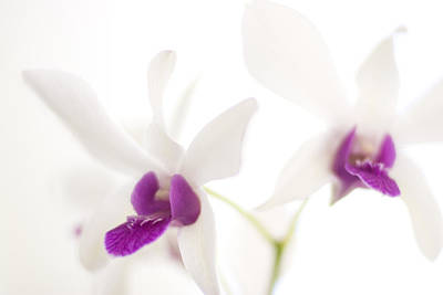 White Orchids Art Print by Bradley R Youngberg