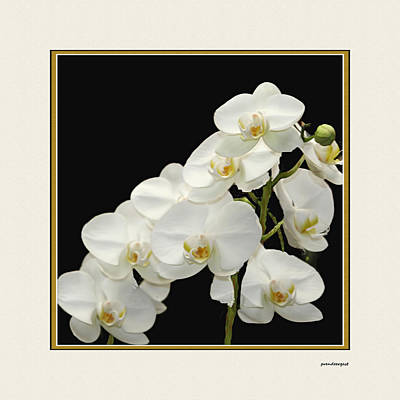 White Orchids II Print by Tom Prendergast