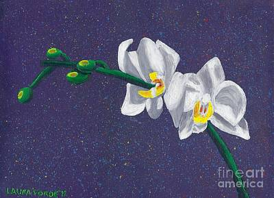 White Orchids On Dark Blue Art Print by Laura Forde
